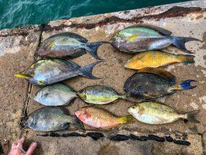 魚の臭い対策