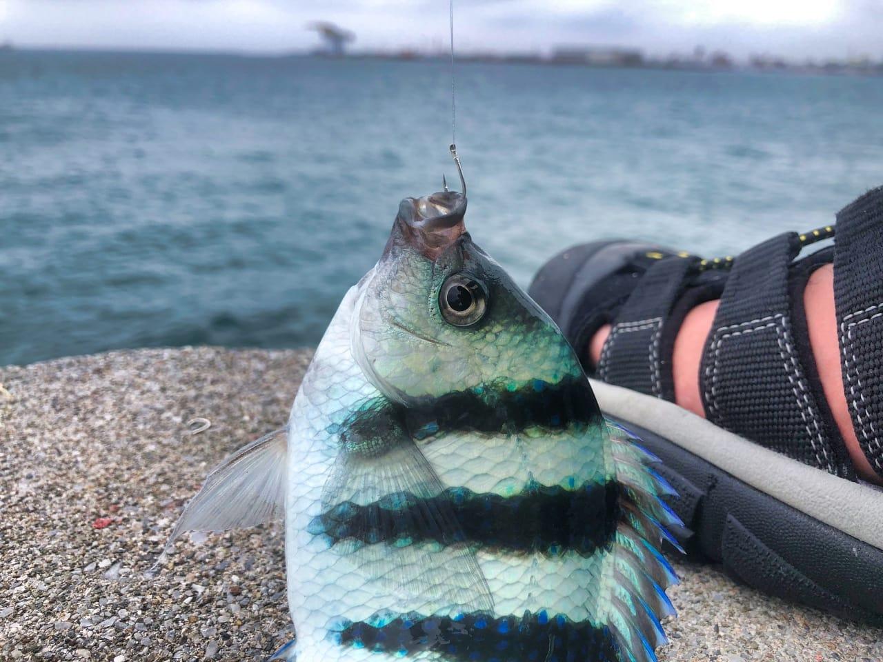 釣り用のサンダルにKEEN(キーン)のニューポートH2を48%オフで購入