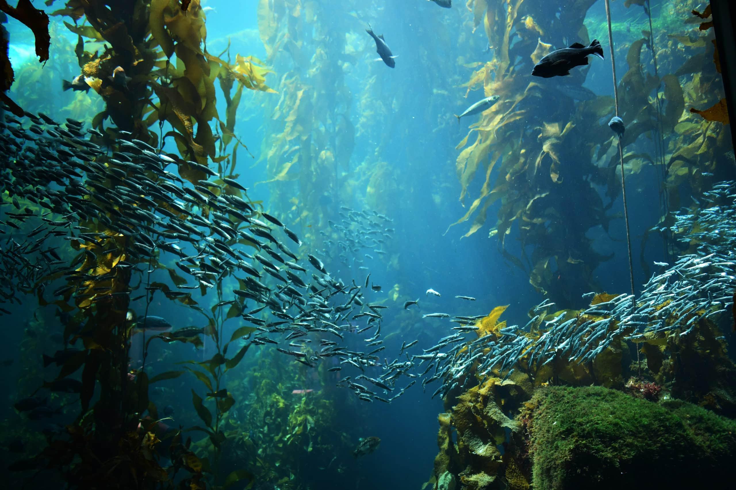 岩場と藻場と小魚のイメージ