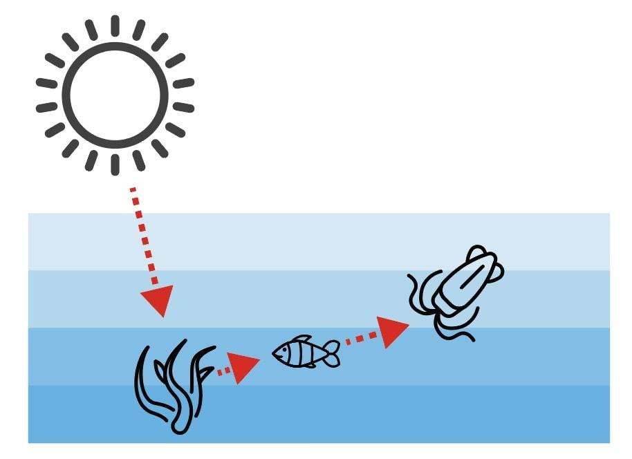 太陽とプランクトンと小魚とイカの関係図